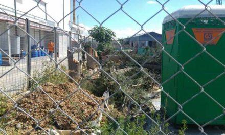 Παράνομη κοπή δέντρων από εργολάβο στην Έγκωμη