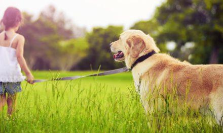 Κίνημα Οικολόγων – Συνεργασία Πολιτών: Χαιρετίζουμε την απόφαση του Δήμου Στροβόλου για τη διακίνηση των σκυλιών