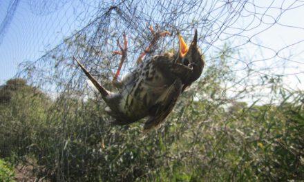 Η Ευρωπαϊκή Επιτροπή ζητά εξηγήσεις για τον καταστροφικό νόμο περί άγριων πτηνών. Όσοι τον ψήφισαν, ακούνε;