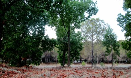 Δυστυχώς τα έργα καταστροφής του δάσους Ακαδημίας, προχωρούν όπως σχεδιάστηκαν