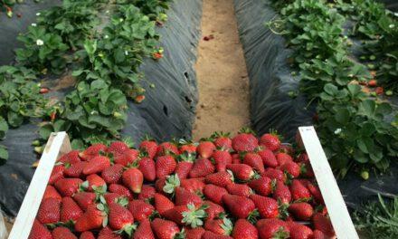 Στο ίδιο έργο θεατές για τη χρήση φυτοφαρμάκων σε φρούτα