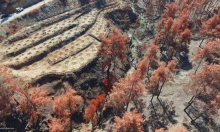 Η πολιτική που ακολουθείται σε καμένες περιοχές είναι: Κυνηγήστε για να σωθούν τα δέντρα