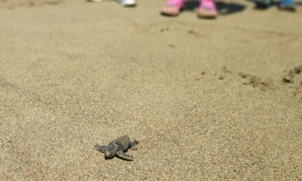 Αφήστε τις χελώνες να γεννούν – ελεύθερα και καθαρά – στη Λάρα