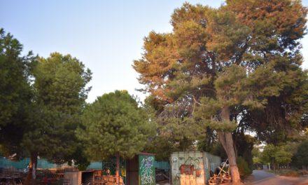 Σώζονται τα δέντρα του Λανιτείου