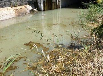 Υγρά απόβλητα στον Κλήμο ποταμό. Απειλείται η πανίδα του υγροβιότοπου και η υγεία των κατοίκων