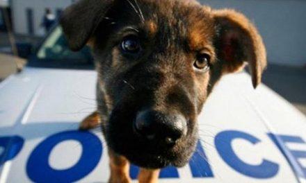 Έγινε μόνο μια αρχή. Ο αγώνας για μια πραγματική Αστυνομία των Ζώων στην Κύπρο, συνεχίζεται