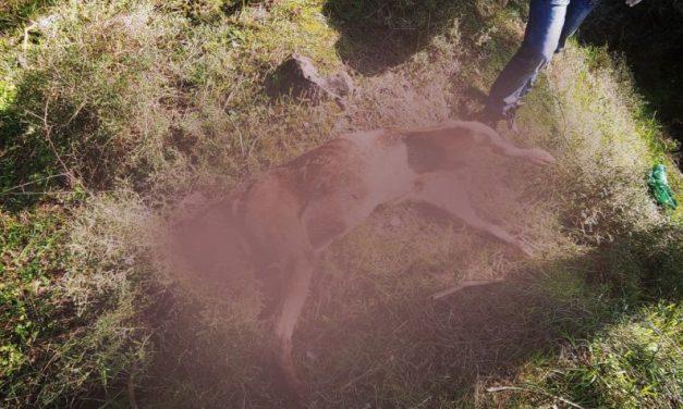 Ομαδικός τάφος σκύλων στη Λευκωσία. Πού είναι η Αστυνομία των Ζώων;
