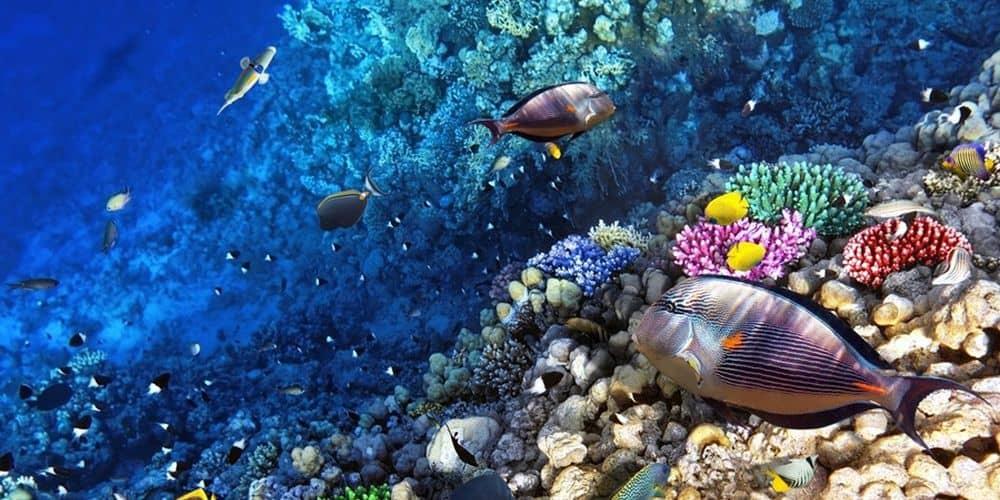 08 Ιουνίου: Παγκόσμια μέρα Ωκεανών