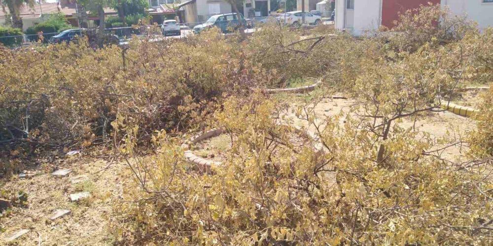 Σφαγή δέντρων σε δημοτικό σχολείο στη Λάρνακα χωρίς καμία έγκριση