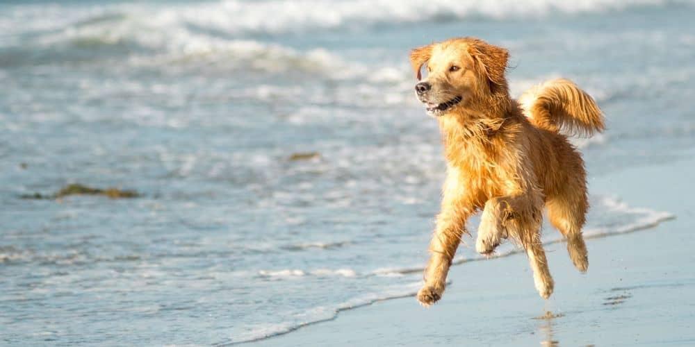Παραλίες για σκύλους