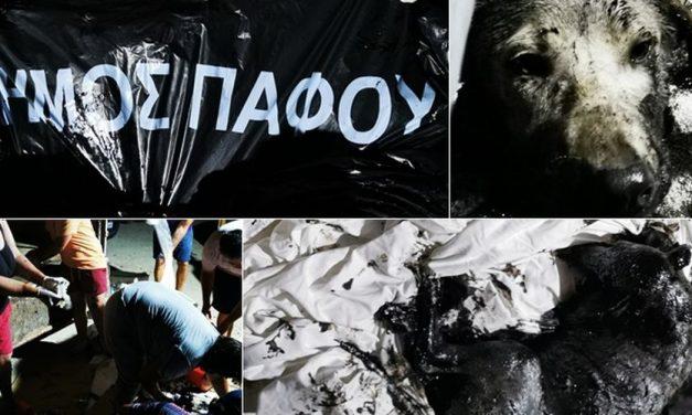 Να εντοπιστούν και να τιμωρηθούν άμεσα οι υπεύθυνοι που εγκατέλειψαν σκυλάκια περιχυμένα με πίσσα και τα πέταξαν στην πόρτα καταφυγίου ζώων στην Πάφο