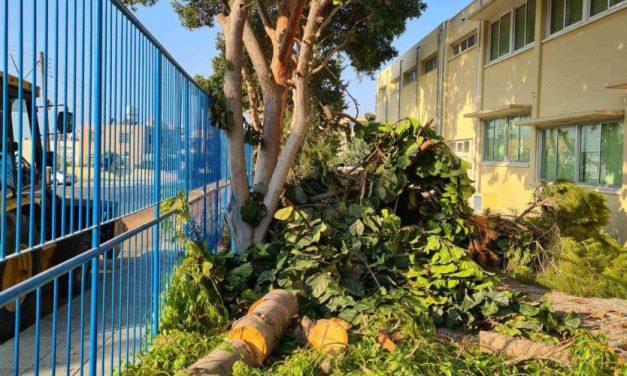 Περιβαλλοντικό έγκλημα με αποκοπή δέντρων σε σχολείο στην Πάφο