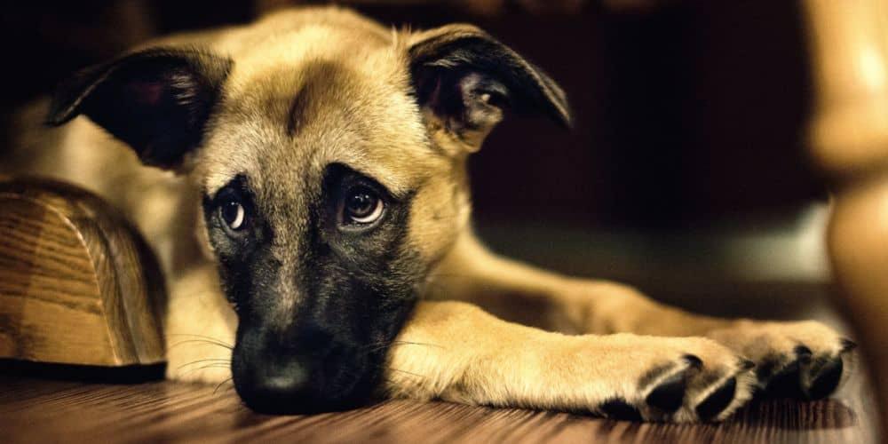 Άμεση διερεύνηση και απονομή δικαιοσύνης για το νέο περιστατικό κακοποίησης και δολοφονίας ζώων