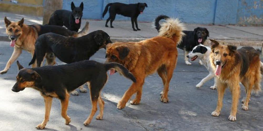 Το Υπουργείο Γεωργίας να εξεύρει άμεσα λύση για τα 150 σκυλιά που θα μείνουν στο δρόμο