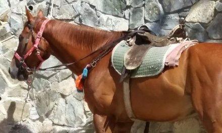 Ένας σωρός από παρανομίες πίσω από τα ταλαιπωρημένα άλογα στο Τρόοδος. Προκλητική αδιαφορία από το Τμήμα Δασών